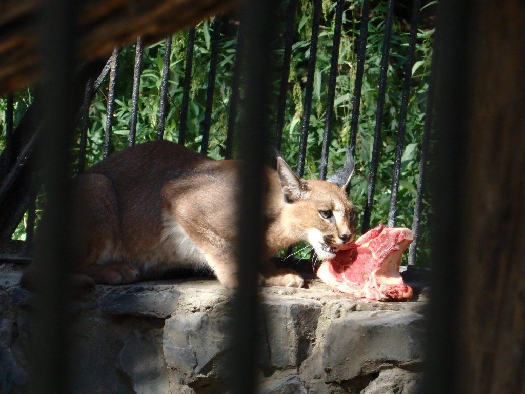 ノボシビルスク動物園